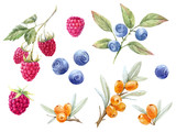 Watercolor forest berries - 191962284