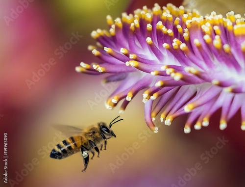 Aluminium Bee Flower and bee