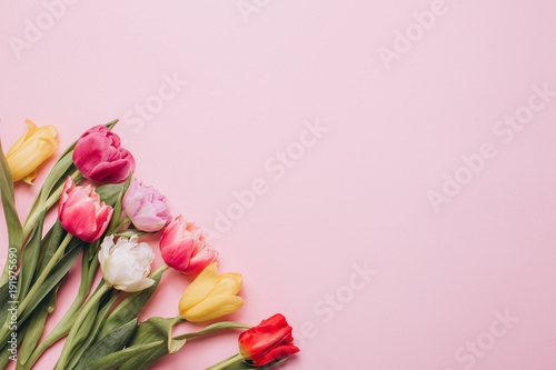 Tulips on a pink background. Flat lay and top view.