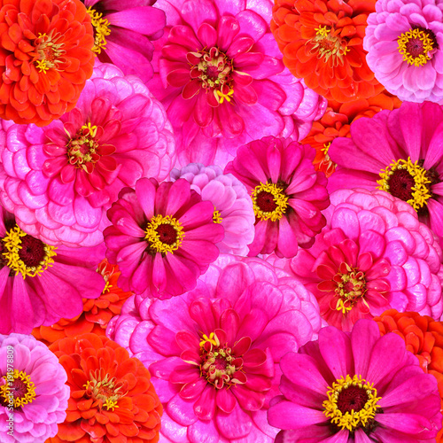 Bright red, pink and purple garden flowers as background image.