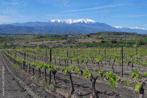 Aluminium Wijngaard Vignes sur fond de montagne