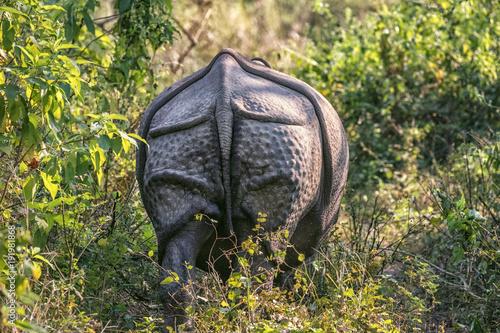Aluminium Neushoorn Indian Rhinoceros, Rhinoceros unicornis, Chitwan NP, Nepal