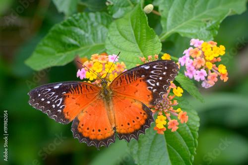Aluminium Vlinder A Beautiful Butterfly