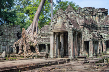 Roots of a banyan tree at Ta Prohm temple in Angkor, Siem Rep, Cambodia