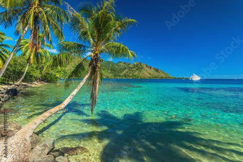 Drzewka palmowe i spokojna zatoka przy Moorea w Tahiti