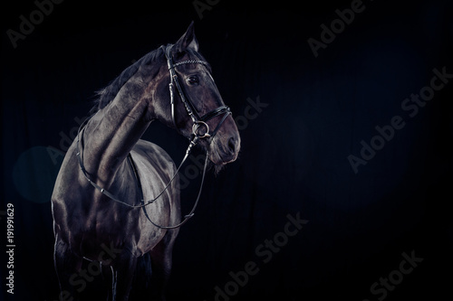 Aluminium Paarden Horse On Black Background