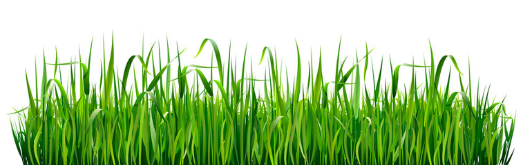 Green grass borders. High green fresh grass isolated on white background.
