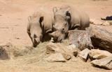 rhinoceros - 191995686