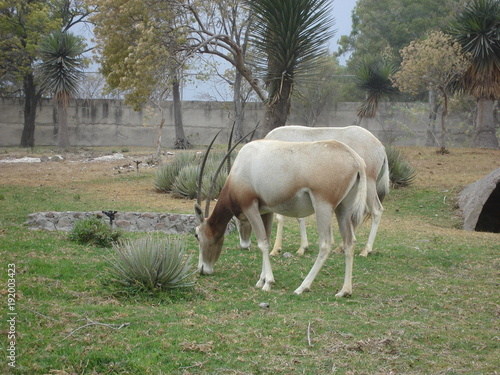 Aluminium Paarden buffalo, animal, willife, nature, hena, lyon, girafe, bear, hipopotamus, zebra, monke, african, safari, tribu, zoo, park, ñu, tiger, selve, elephant, alpaca