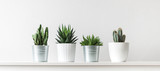 Collection of various cactus and succulent plants in different pots. Potted cactus house plants on white shelf against white wall. - 192008228