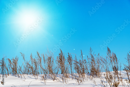 Foto op Aluminium Blauw Landscape with sun in the blue sky and dry grass
