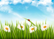 Nature background with green grass and daisy. Vector.