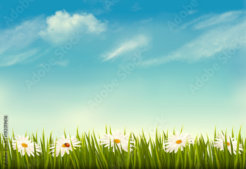 Spring nature background with green grass and sky. Vector. - 192019616