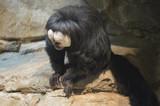 Saki monkey - 192028064