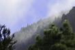 Berge Pinien Wolken, Teneriffa kanarische Insel, Spanien - 192038421