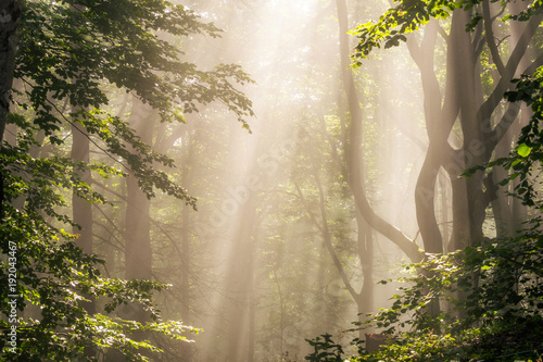 Foto Murales Morning sun rays in forest