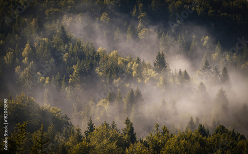 Mgła pokrywa las.