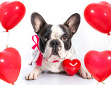 Cute french bulldog with heart shape balloons for valentines - 192046223