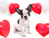 Cute puppy with heart shape balloons for valentines - 192046241