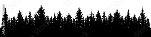 Forest of Christmas fir trees silhouette. Coniferous spruce panorama. Park of evergreen wood. Vector on white background