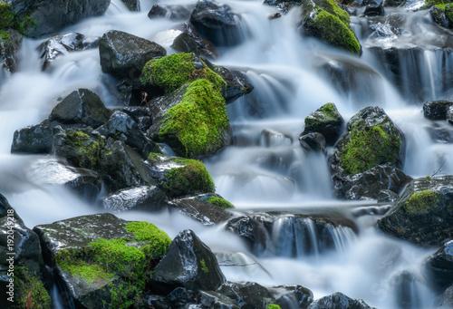 Olympic National Park Rain Forest 1923 - 192049218