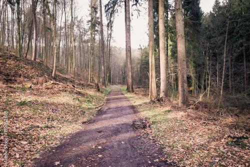 Fotobehang Weg in bos Waldweg