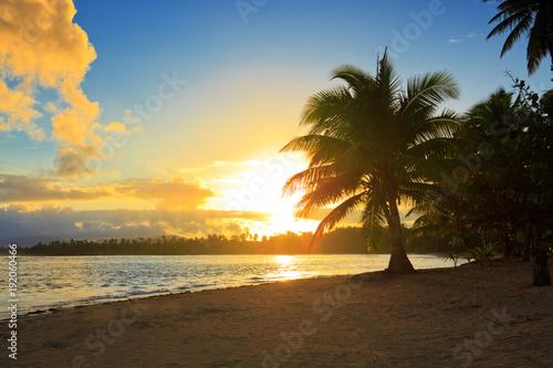 Staande foto Ochtendgloren Tropical sunrise with coconut palm trees.