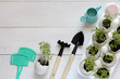 Greens sprouts in an egg shell and garden accessories on a white wooden background