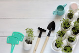 Greens sprouts in an egg shell and garden accessories on a white wooden background - 192071231