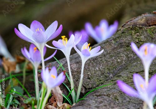 Wiese mit zarten Blumen im Frühling - 192079251