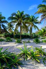 Palm Trees - Tulum, Mexico