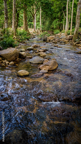 Streams in the forest - 192090292