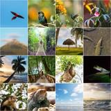 Costa Rica collage - 192123059