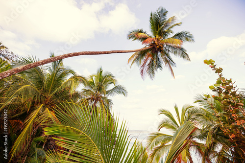 Fotobehang Galyna A. Coast in Costa Rica