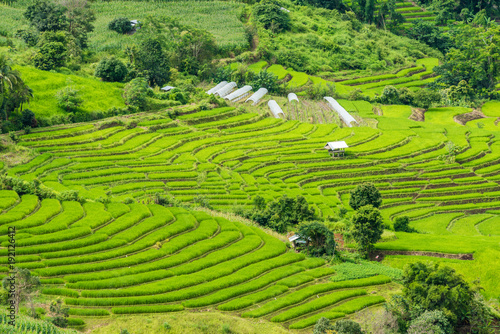 Aluminium Rijstvelden Terraced rice fields at Pa pong Pieng in Chiang Mai, Thailand