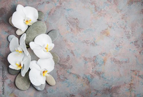 biale-orchidee,-szare-kamienie
