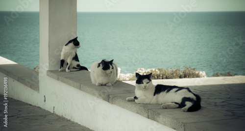 Foto op Canvas Cyprus Cats of Cyprus.