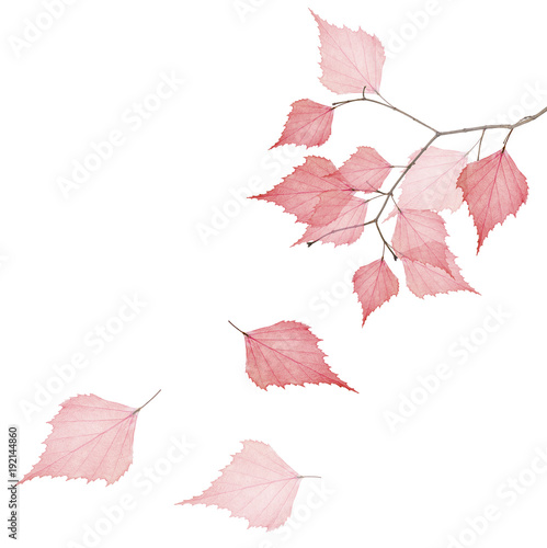 tree branch with three falling red dried leaves