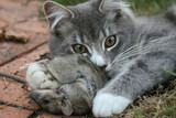 Cat and mouse  games