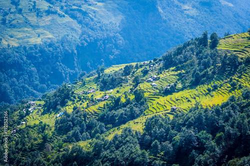Aluminium Rijstvelden Beautiful landscape with green field of rice in nepal