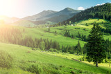 beautiful summer monntain landscape with green meadows and trees