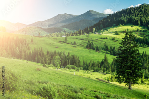 Aluminium Zomer beautiful summer monntain landscape with green meadows and trees