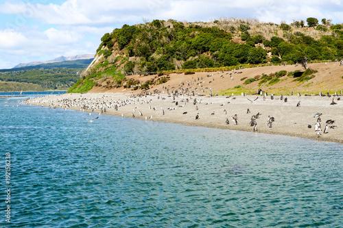 Foto op Canvas Groen blauw Pinguini in riva al mare