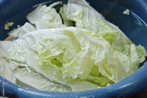 fresh Chinese cabbage water cleaning in plastic basin