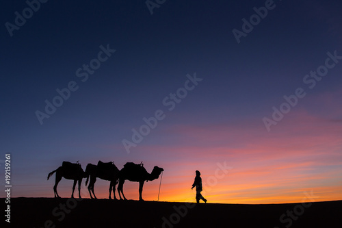 Fototapeta Silhouette of caravan in desert Sahara, Morocco with beautiful and colorful sunset in background