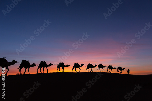 Plexiglas Kameel Silhouette of caravan in desert Sahara, Morocco with beautiful and colorful sunset in background