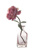 Artificial rose in a glass vase in a vase isolated on white background. - 192159464