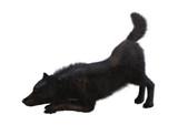3D Rendering Black Wolf on White - 192190293