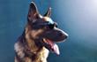 Собака. Фауна - 192197872