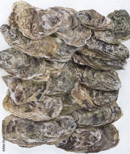 Fototapeta oysters, sea shells background